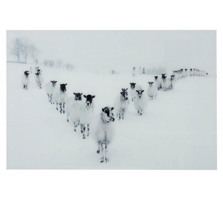 Tableau verre décor mouton FOREST